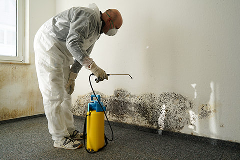 Mold Remediation Residential
